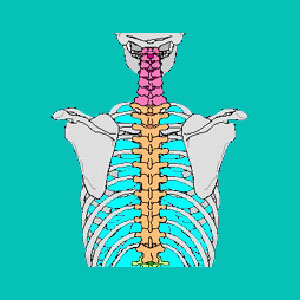 thoracic degenerative disc disease